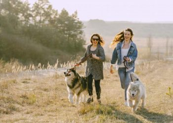 Hiring Dog Walk Brisbane Professionals