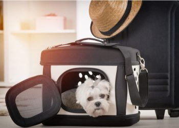 How to Choose a Designer Pet Carrier