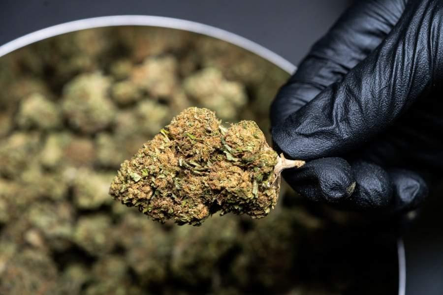cannabis oil Benefits