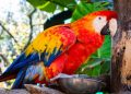 How Long do Parrots Live