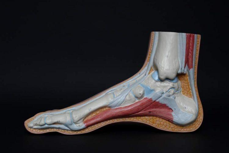Achilles Tendon Injury Care