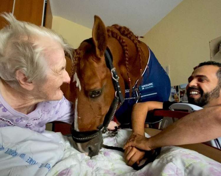 Peyo Horse Therapist