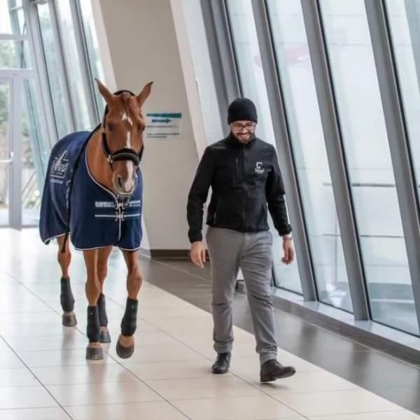 Doctor Peyo Horse