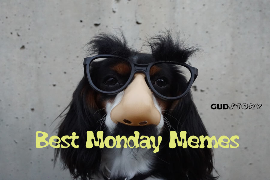 Best Monday Memes That Will Keep You Laughing