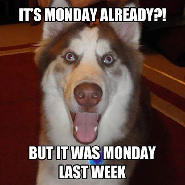 what-monday-again