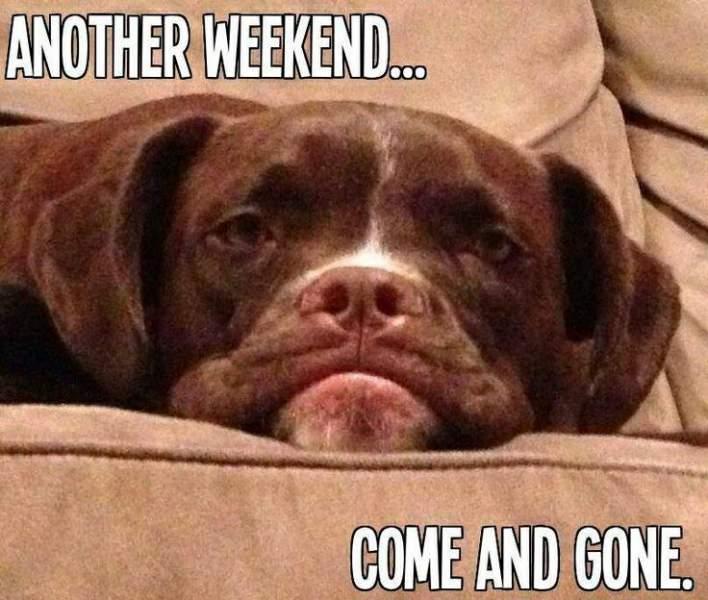 Monday-dogs