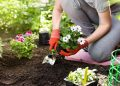 Impressive Benefits of Gardening