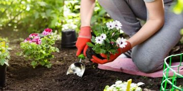Impressive Benefits of Gardening