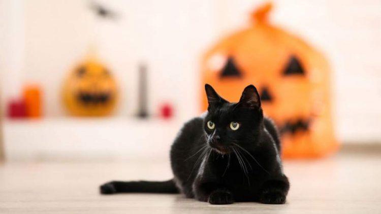 Weird Superstitions and Their Origin