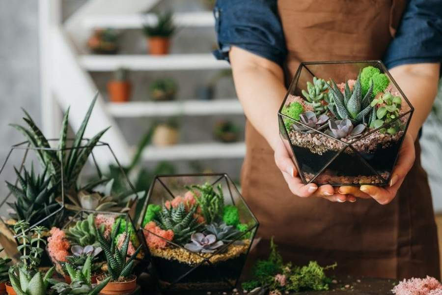 Plant Hampers for the Green Thumb in Your Life