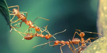 How to Deal with Ants in Your Boston Home