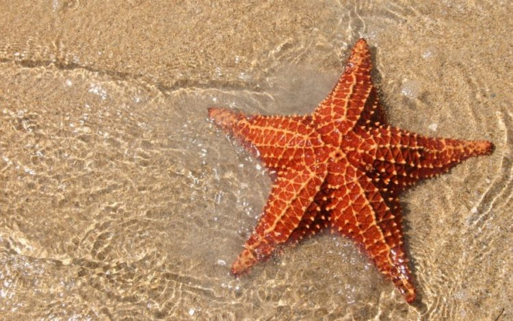 Interesting Facts About Starfish