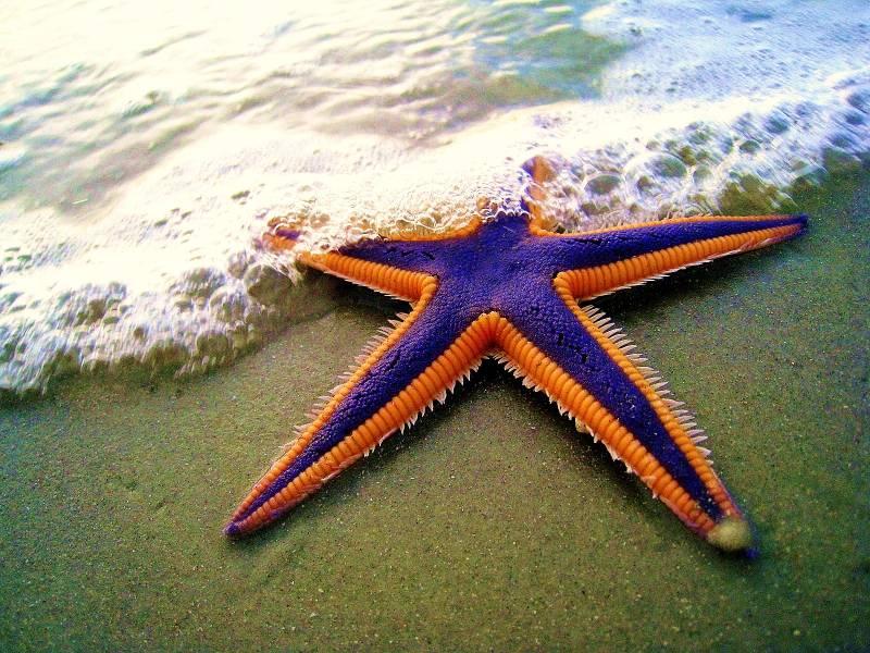 Do Starfish have Eyes
