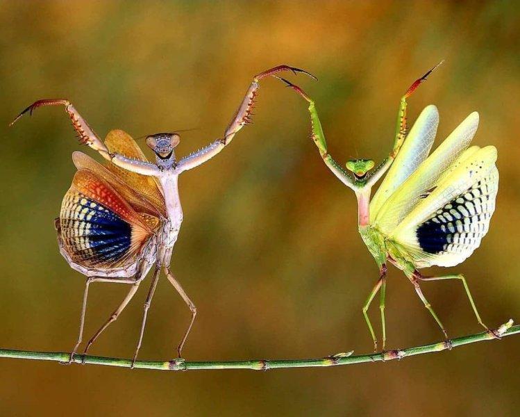 10 Interesting Facts About Praying Mantis