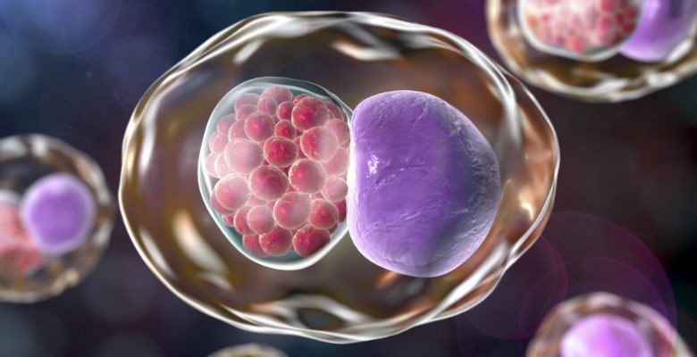 Chlamydia An Overview