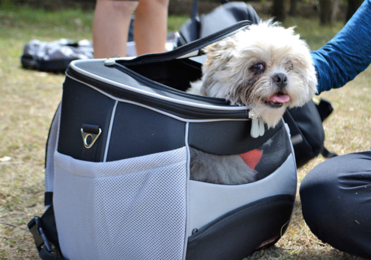 Excellent Tips For Traveling With Your Dogs