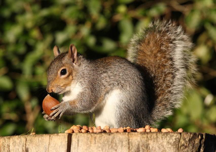 Purchasing A Squirrel Baffle