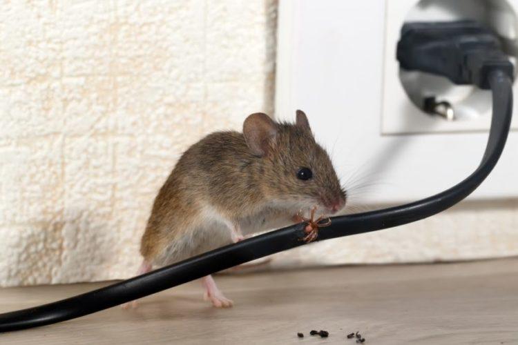 A Guide to Home Pest Control & Prevention