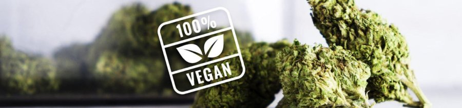 Top Tips for Finding Vegan CBD Products